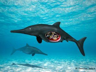 Pregnant ichthyosaur