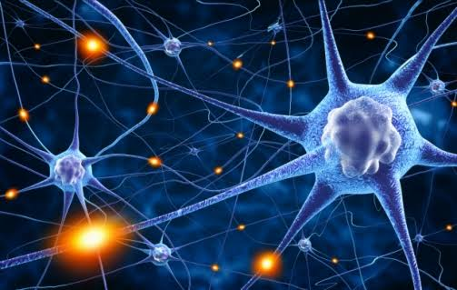 Neurons and memory