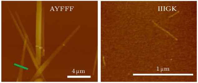 AFM images of peptides