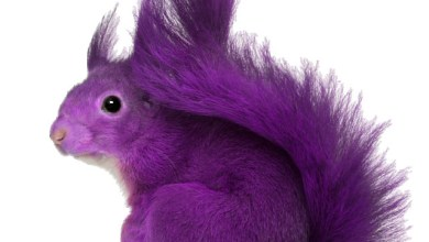 Photo of The Purple Squirrel