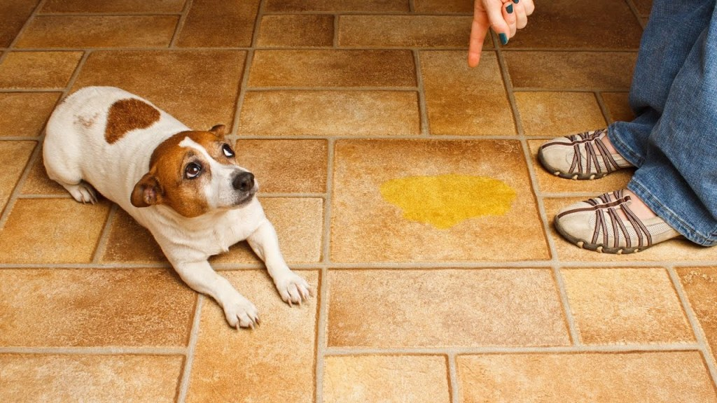 yelling at your dog when they have a potty accident will usually make the problem worse, not better.