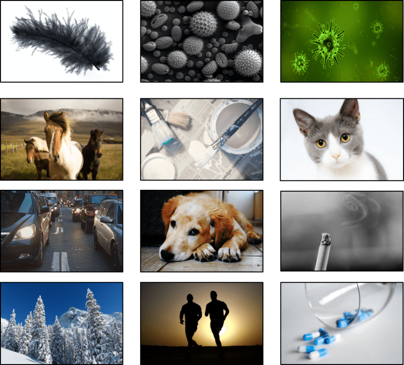 Images of asthma triggers including feathers, pollen, viruses, animals, fumes, exercise and drugs.