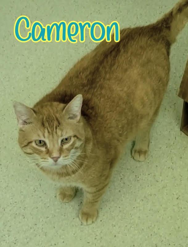 Cameron 4-Text