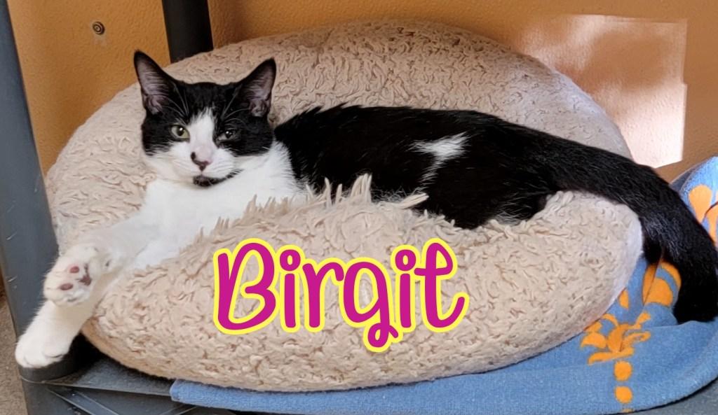 Birgit 2-Text