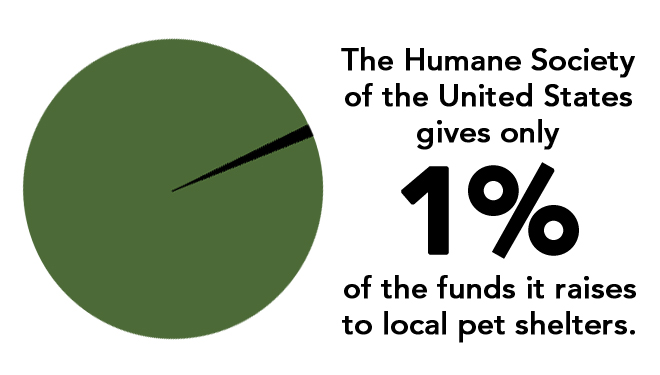 graph of HSUS shelter spending
