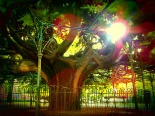 Un arbre dans un parc à Lisbonne !