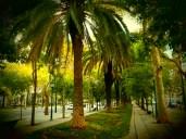 Palmiers à Lisbonne !