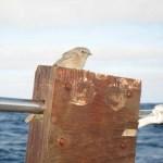 Petit oiseau perdu au milieu de l'océan !