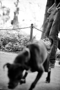 """Å måtte ha hundelisens er et overgrep fra staten, om vi skal tro tilhengere av """"sovereign citizen""""-ideologien. Foto: Arnfinn Pettersen."""
