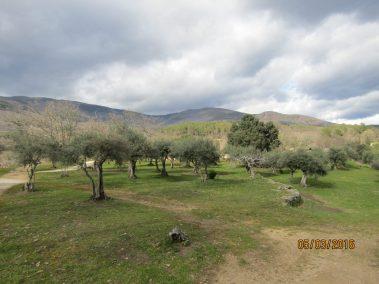 Esta zona de Sierra de Gredos goza de un microclima que mantiene la temperatura más agradable