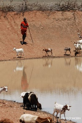 A Maasai herdsman provides water for his goats at a World Concern water pan, a pond dug to retain water even in the dry season.