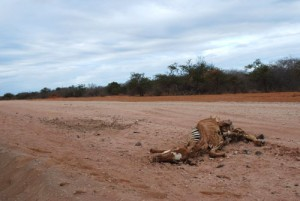 An animal carcass on the road to Somalia.