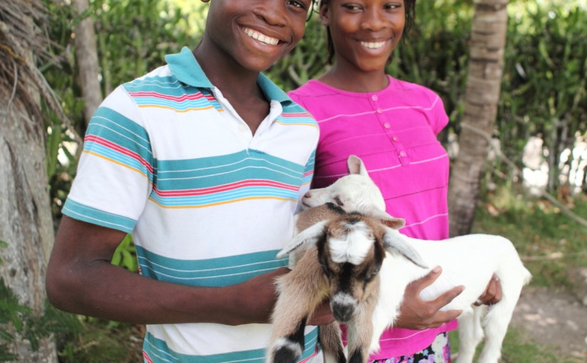 Donate a Goat and Change a Life this Christmas