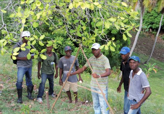 agriculture training to combat food insecurity in Haiti