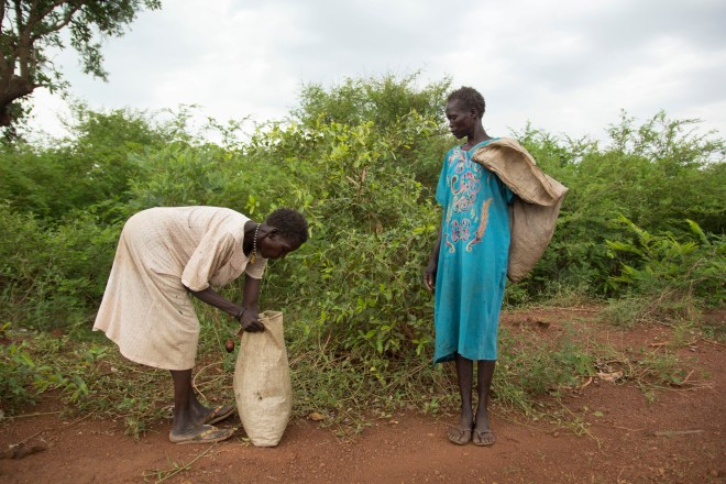 collecting leaves to sell in South Sudan