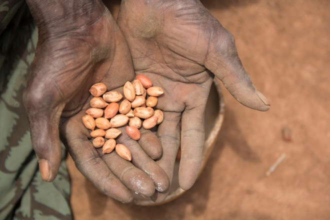 a man in South Sudan receives seeds to plant