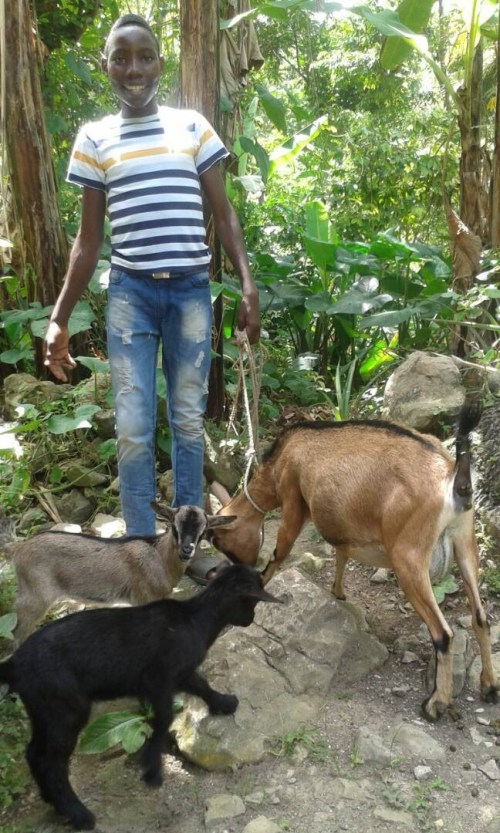 A boy in Haiti receives two goats