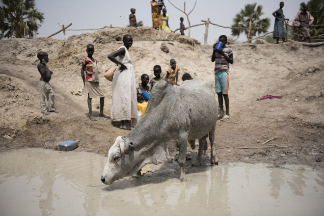 Animals drink from a water hole in South Sudan.