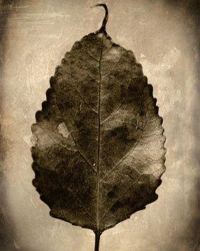 """""""Leaf,"""" 2018"""