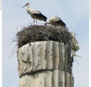 Storks nesting in Ephesus