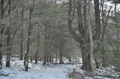 Mass Forest V