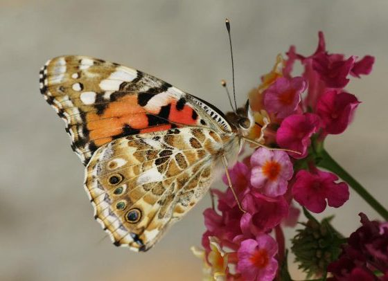 EU Plans to Raise €20bn a Year to Protect Biodiversity