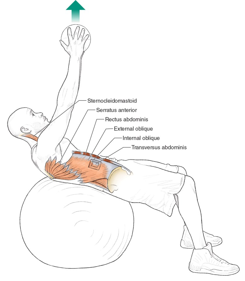 Core exercises for cyclists - Stability Ball Trunk Lift
