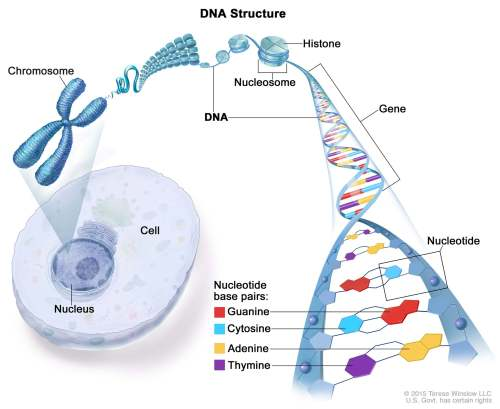 small resolution of a simple explanation of dna structure