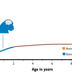 Chimpanzee Skull Diagram Honda Trx 250 Parts Brains The Smithsonian Institution 39s Human Origins Program