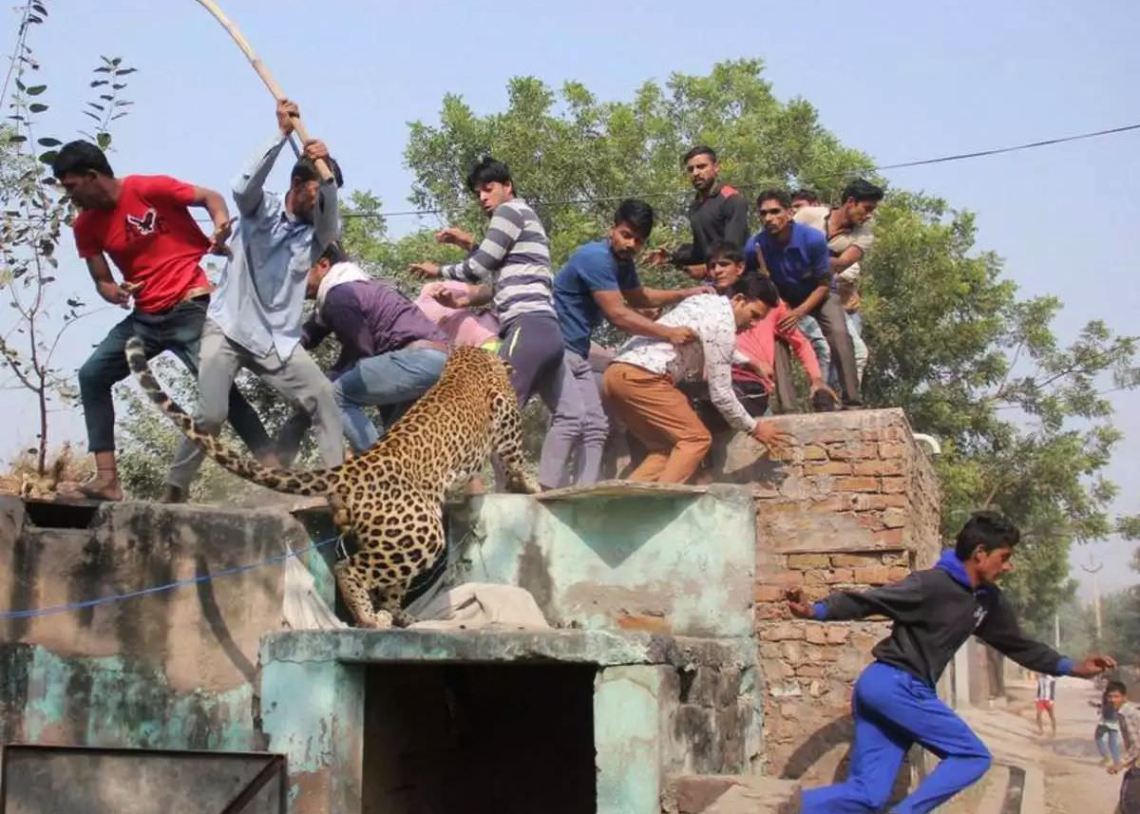 indian villagers fleeing from leopard