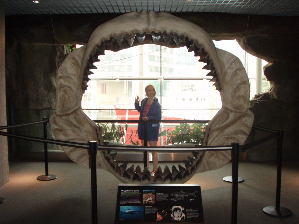 megalodon jaws on display with a lady standing behind them