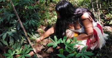 indigenous woman planting chilli