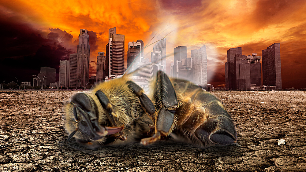 illustration of a dead bee with background of apocalyptic city