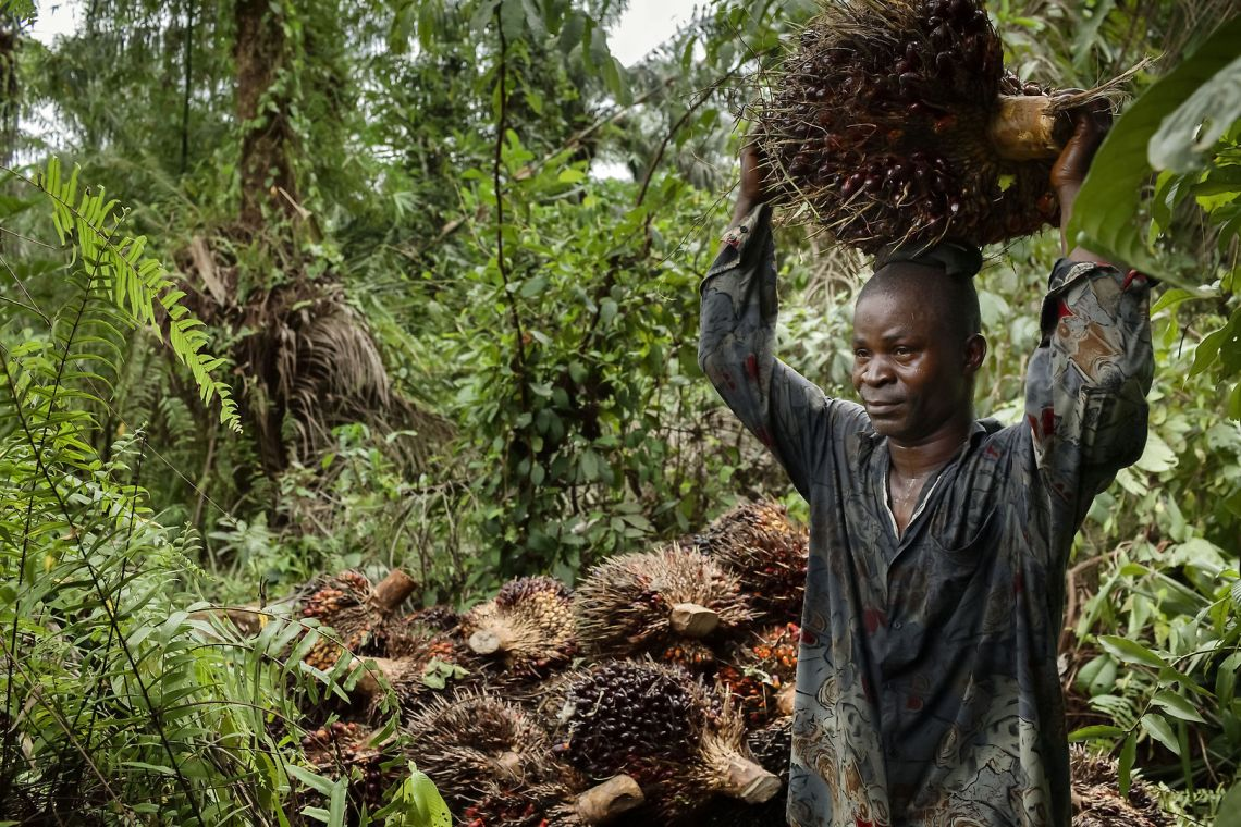 african worker carrying palm oil kernel