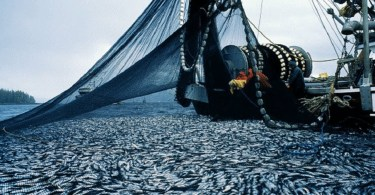huge catch of fish on trawler deck