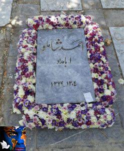 ahmad-shamloo2-247x300