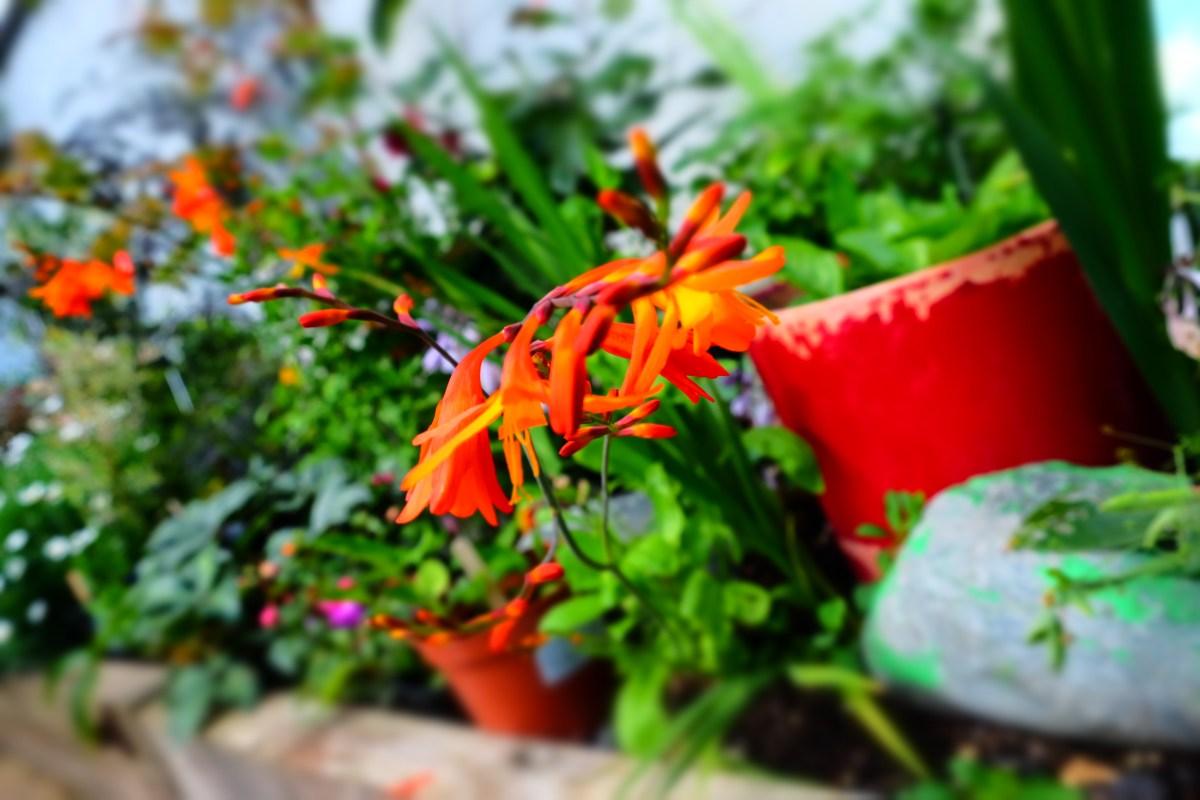 FLOWERS OF WESTON-SUPER-MARE