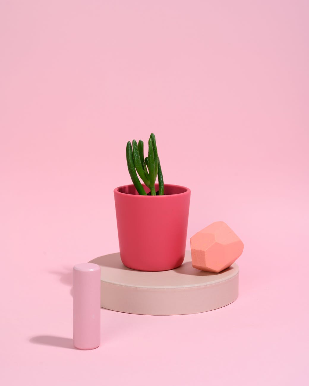 photo of succulent plant on pink vase