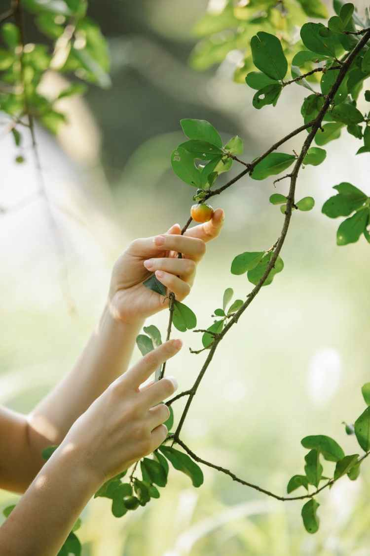 anonymous woman touching tree branch with leaves