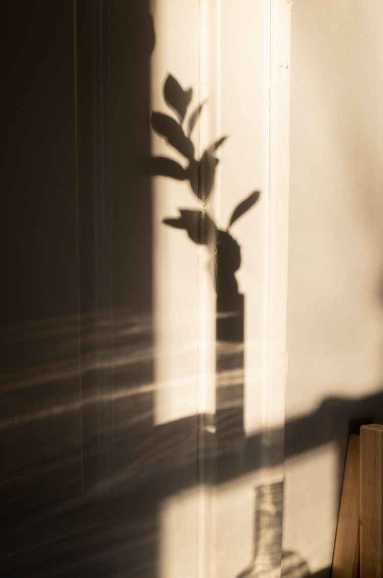 vase of plant shadow on wall in daylight