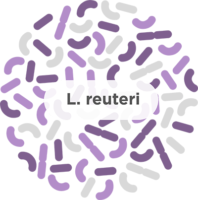 Image result for lactobacillus reuteri