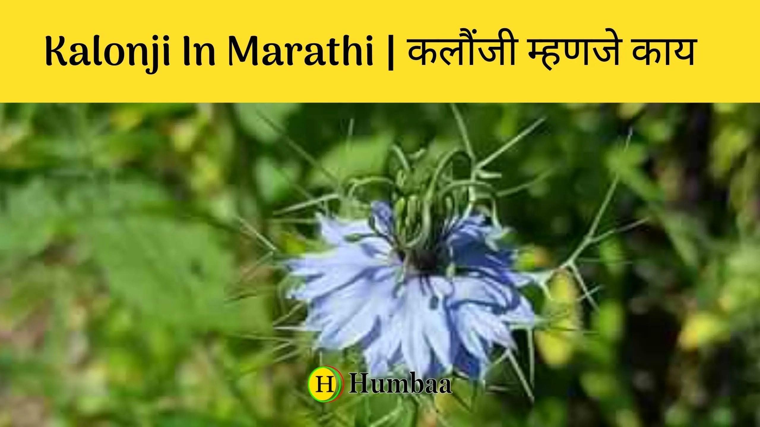 Kalonji In Marathi   कलौंजी म्हणजे काय