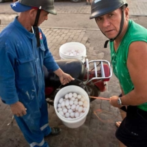 The Eggmen of Cienfuegos