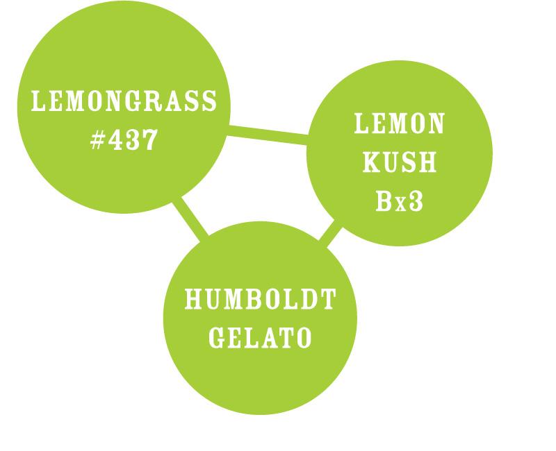 Lemongrass Strain Chart