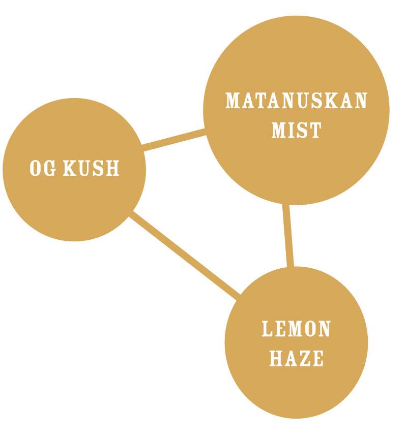 Lemon Kush Graph