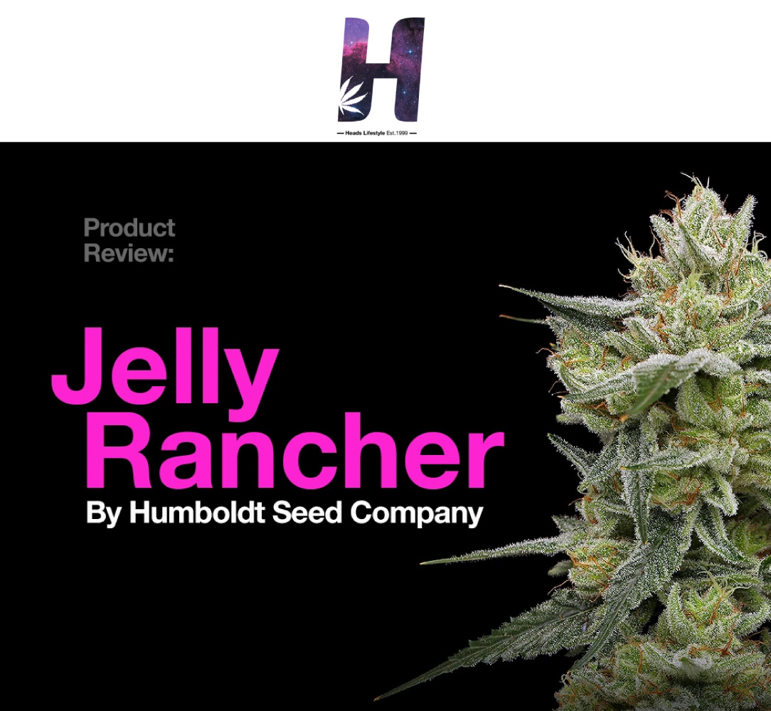 Product Review Jelly Rancher