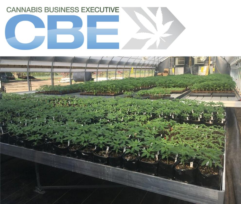 CBE Business Insider