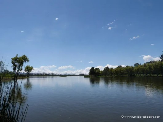 Espejo de Agua Humedal La Florida