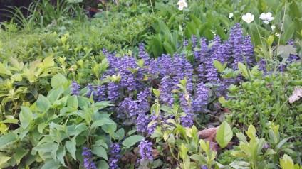 Lavender everywhere ... so beautiful