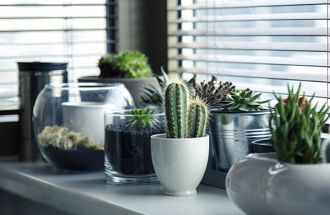 Image of humidifier for indoor plants
